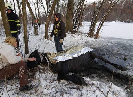 Hasiči zachraňovali z vody koně, kterého objevili náhodní kolemjdoucí propadlého do zamrzlého ramena řeky Dyje u Janova Hradu na Břeclavsku