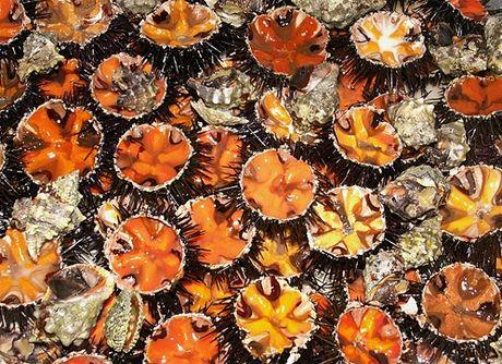 Mořští ježci se jedí syroví