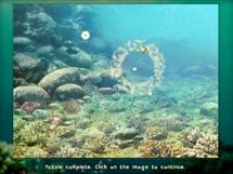 Underwater Puzzle 1