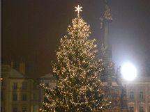 Anketa o nejkrásnější vánoční strom v republice - Olomouc