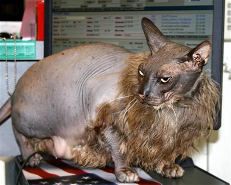 Nejošklivější kočka