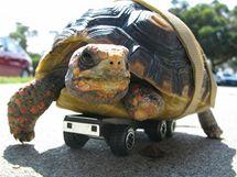 Želva s podvozkem