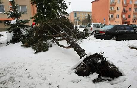 Spadlý strom v Blansku