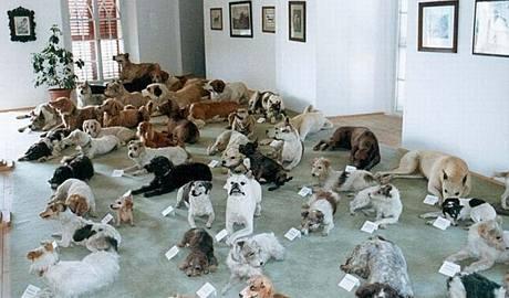 Sbírka vycpaných psů z hradu Bítov