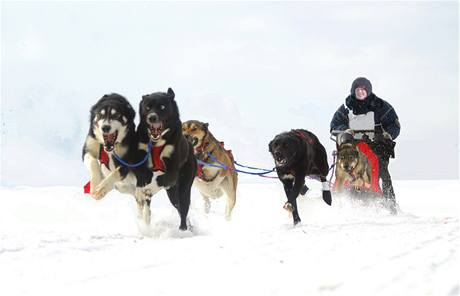 Mushing, to je adrenalin pro člověka i pro psy. Ilustrační foto