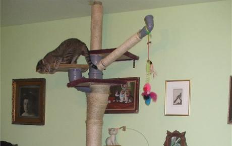 Na vysoké šplhadlo můžete kočkám umístit libovolné množství odboček a větví s odpočívadly, boudičkami apod.