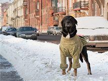 Spíše než svetr potřebují psi na vycházku zasněženým městem preventivně ošetřit tlapky proti soli na komunikacích.