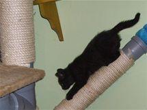 Kočky si rády otestují i ještě ne zcela dokončené škrabadlo.