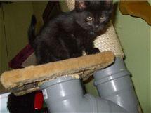 Autorka tohoto škrabadla použila trubky o průměru 15 cm, kočky ale budou spokojené i s menším průměrem.