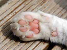 Správně obroušené kočičí drápky v klidovém stavu nepřečnívají bříška prstů.