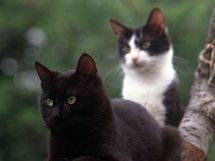Venkovní kočky si drápky obrušují i při lezení po stromech.