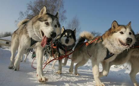 Závody psích spřežení Cross country - mid Janovičky. (24. ledna 2010)