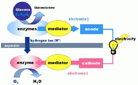 Schéma mechanismu výroby elektřiny bio bateriemi.