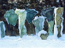 Kanadská umělkyně Nicole Dextras využívá prchavou krásu ledu jako metaforu k vyjádření pomíjivosti prostředí i lidské existence.