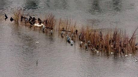 Kormoráni, lysky, rackové a další vodní ptactvo na Vltavě.