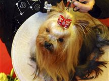 Šampionem mezi psími šampiony je fena Xmas Wish Stříbrné přání