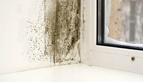 Zvýšená vlhkost v okolí okna může způsobit vznik plísní
