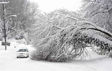 Popadané stromy zpřetrhaly na mnoha místech elektrická vedení (6. února 2010)