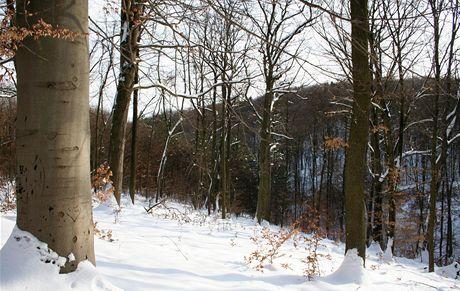 Na běžkách Podkomorskými lesy. Značnou část přírodního parku tvoří světlé bučiny