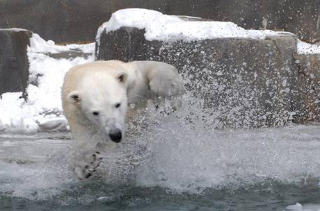 Zima udělala radost obyvatelům chicagské zoo.