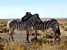 Namibie, Národní park Etosha