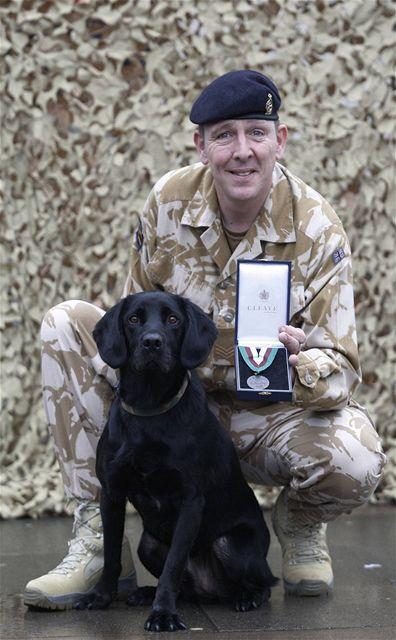 Labrador Treo pózuje s psovodem Davem Heyhoem a s Dickenovou cenou, kterou získal za statečnost během služby v Afghánistánu (24. února 2010)
