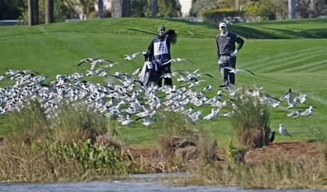 Jimmy Walker čeká před ránou na turnaji Honda Classic, až se zvedne hejno ptáků.