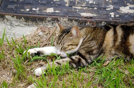 Kočky pohybující se venku mohou klíště chytit snadno. Důležitější než očkování proti borelióze je pro ně prevence proti vnějším parazitům v podobě obojku či spot-onu s repelentním účinkem.