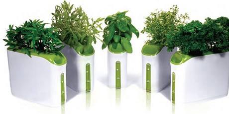 V samozavlažovacím květináči nahradila zeminu houbička napuštěná výživnými látkami