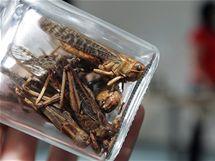 Marie Borkovcová z Mendelovy univerzity v Brně vede přednášku pod názvem Hmyz ve výživě lidstva spojenou s degustací hmyzích pokrmů (16. 3. 2010).