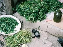 Ázerbájdžán. Baku. Bylinky, nejen léčivky, ale i koření a zelenina. Na venkově zužitkují co se dá. Bez samozásobitelství by byl život v Ázerbájdžánu ještě těžší