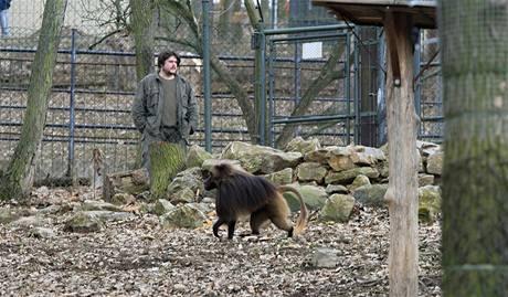Otevření upraveného výběhu paviána Heika v brněnské zoo (21. 3. 2010).