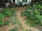 Třetí krok mulčování při budování základů ekozahrady - nechat se růst zasetá semínka.
