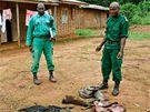 Str�ci biosf�rick� rezervace Dja v Kamerunu chr�n� gorily, slony a dal�� zv��ata. Nasazuj� vlastn� �ivoty, p�itom jim chyb� v�bava, aby mohli �elit n�jezd�m ozbrojen�ch pytl�k�.