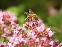 Důležitou součástí ekozahrad je hmyz a další živočichové.