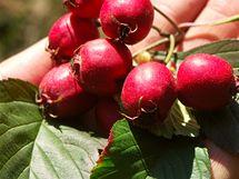 Plody ekozahrady sklízíte od jara do zimy.