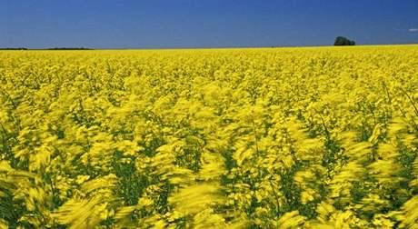 Řepka olejná, biopaliva