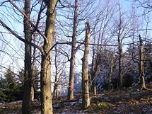 Přírodní rezervace Kelčský Javorník