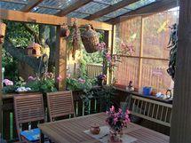 Z naší krásné terasy pozorujeme stáda srnek