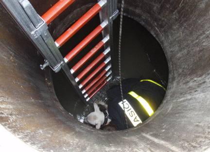 Ostravští hasiči zachránili psa, který se propadl do kanálu