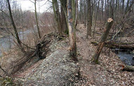 Unikátní pohled: uprostřed stezka, po pravici ve stejné výši potok, ihned zleva zahloubené koryto řeky