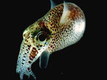 Londýnské přírodovědné muzeum zve na prohlídku mořského dna.