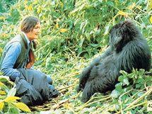 Dian Fossey v terénu
