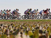 Peloton cyklistů projíždí kolem pole poblíž města Meerssen na trati závodu Amstel Gold race.