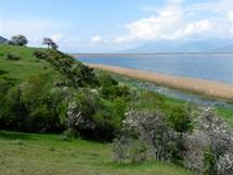 Ostrov Agios Achilleos v Malém Prespanském jezeře (Prespanské jezero)