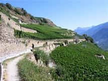 Švýcarsko, Sion, vinice východně od města (Valais)