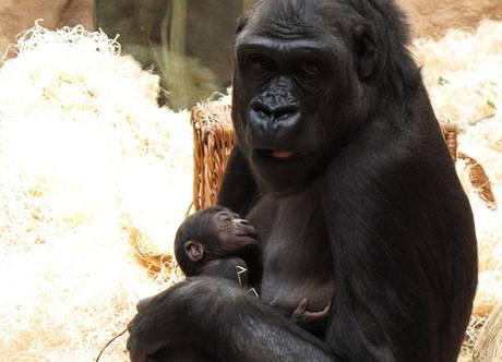 Kijivu s miminkem v neděli 25. dubna 2010