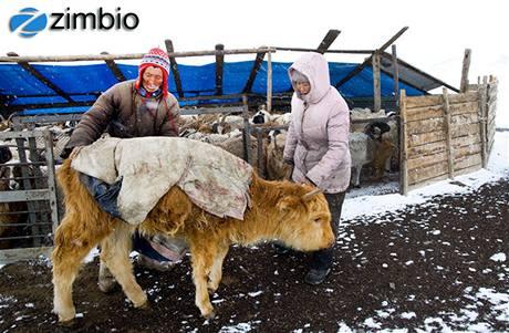 Mongolsko se potýká s tuhými mrazy.