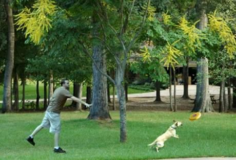 Výsledek: muž hází psovi frisbee