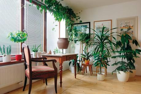 Místnost s knihovnou v patře nabízí dostatek prostoru pro relaxaci. Rostliny jsou citlivě opečovávány paní